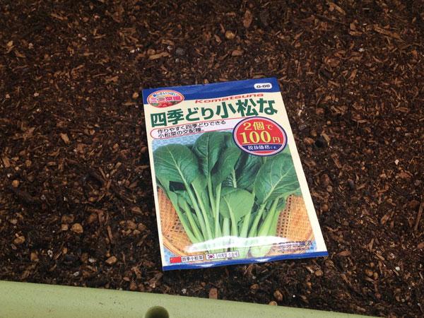 100円ショップダイソーで買った小松菜の種